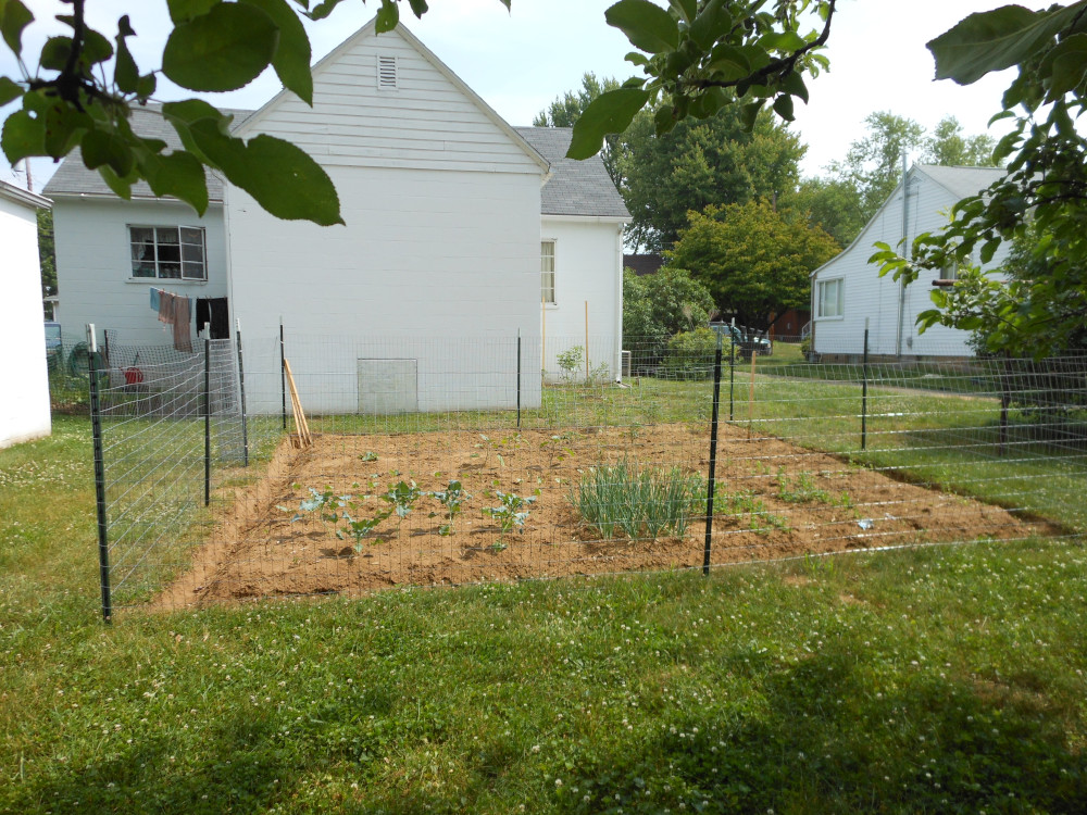 fencing garden to protect it